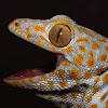 Birmingham Reptiles and Pets