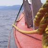 Oshan Whale Watch