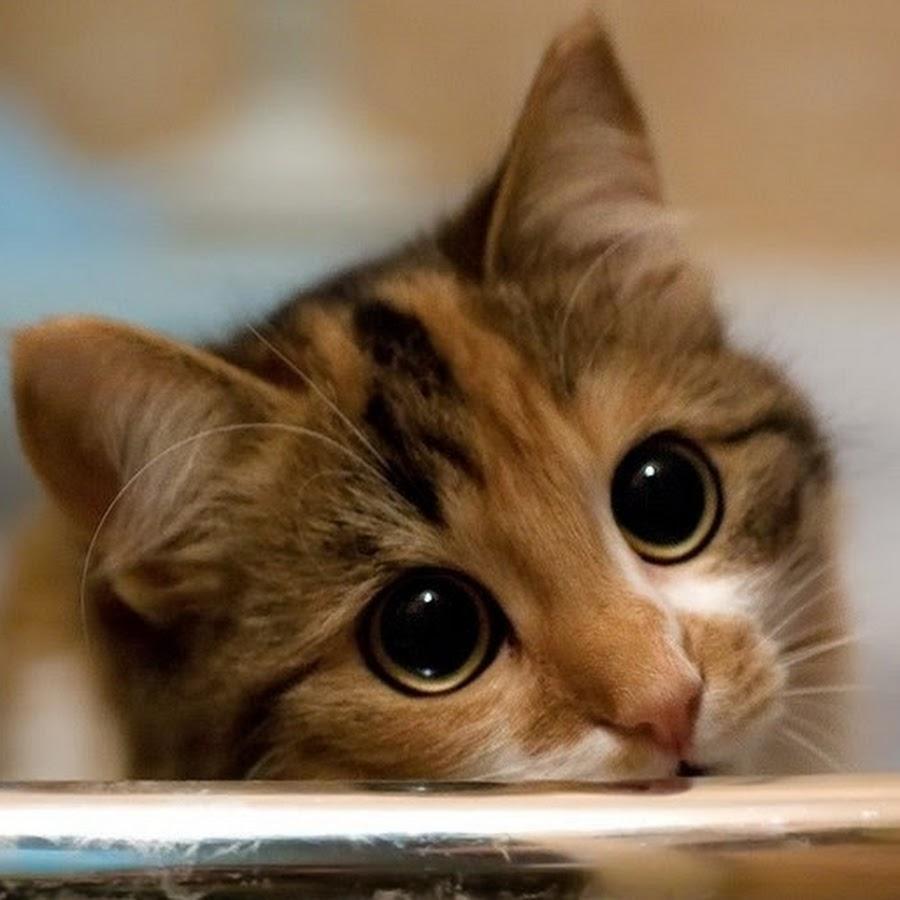 Картинки с котами скучаю, картинки юбилеем