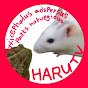 Haruチャンネル