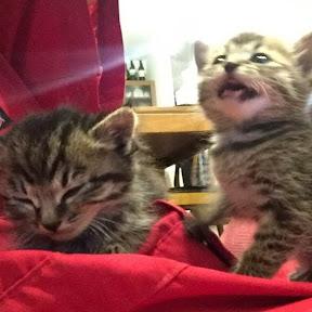 Cute kitten(双子の子猫のわんぱく日記) YouTuber