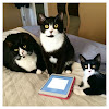 Tuxedo Trio