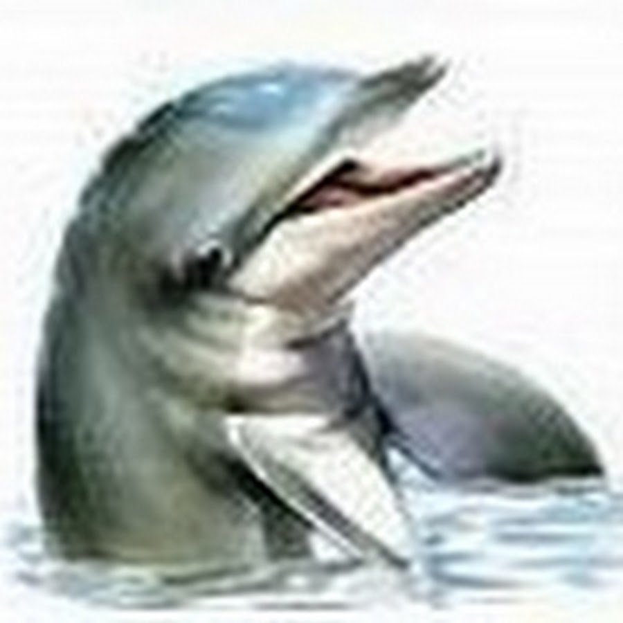 Картинка дельфин анимация