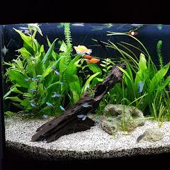 Leiderdorps Aquarium Net Worth