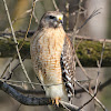 Chattanooga Audubon