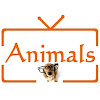 Animals TV