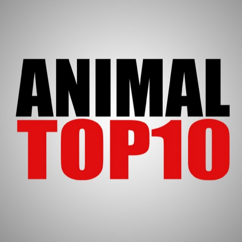 AnimalTop10