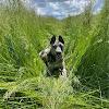 Dagley Ranch