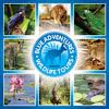 Blue Adventures Port Douglas