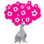 Plante Rosa do Deserto