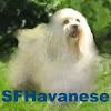 SFHavanese