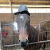 Cole CraftAlpha