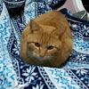 野良猫&おあんチャンネル