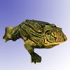 Fat Frogs Swamp