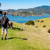 Bay of Islands - Topic