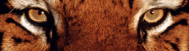 FaZe Temperrr's Cover Image