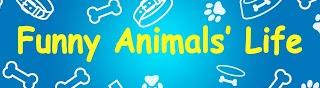Funny Animals' Life