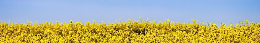 Моя країна - Україна баннер