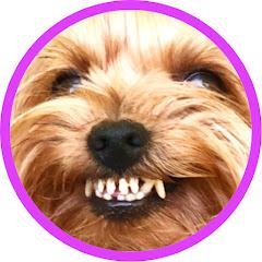Злой Пёс