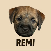 Remi the Border Terrier