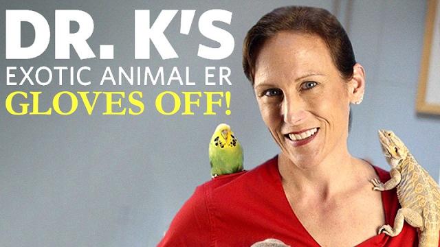 Watch Dr  K's Exotic Animal ER: Gloves Off! online | YouTube