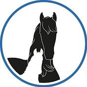 Friesian Horses net worth