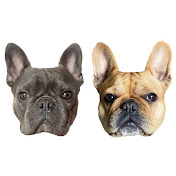 Isa & Hugo French Bulldog net worth
