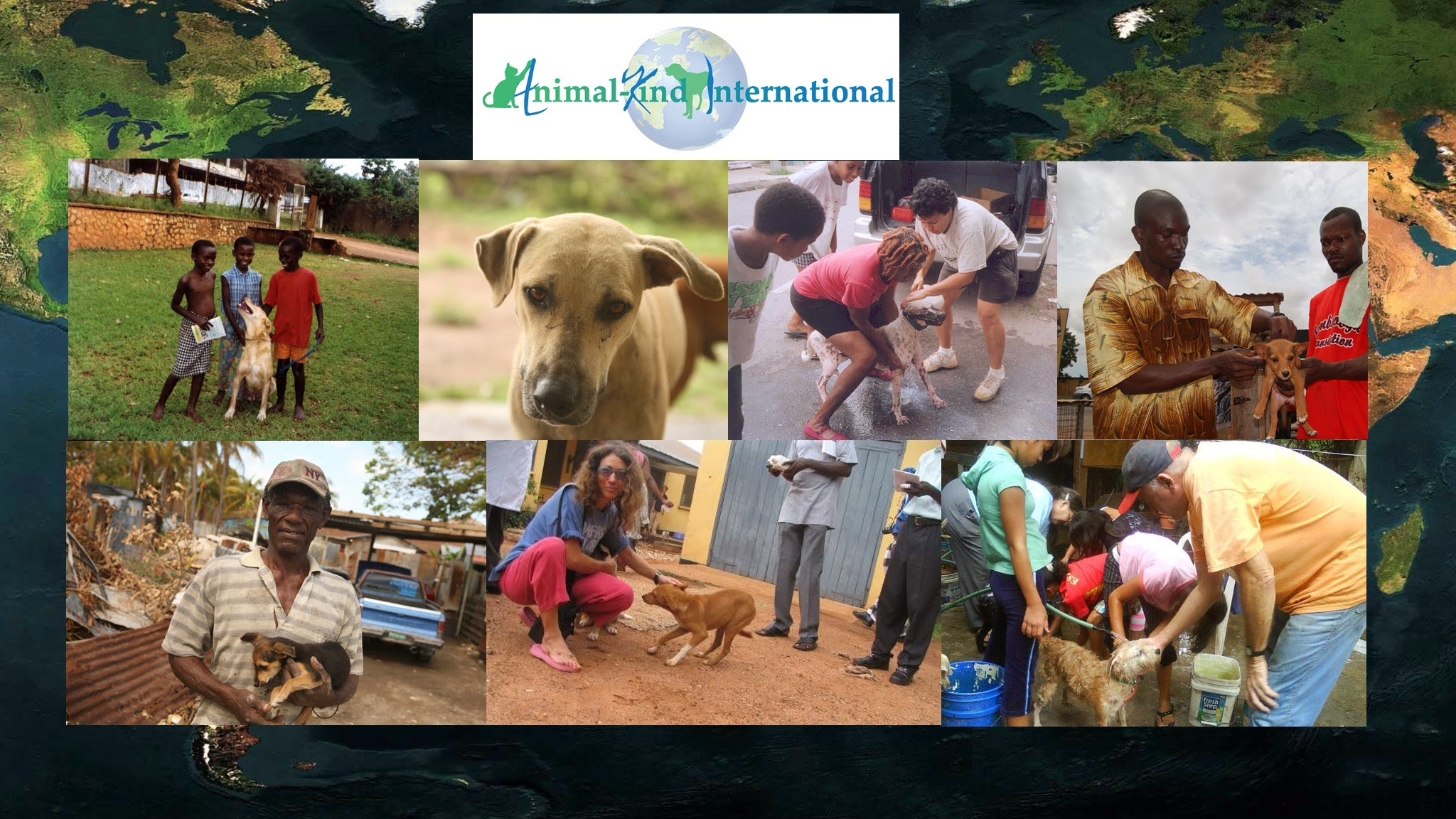 Animal Kind International