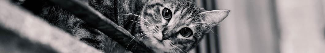 พี่แมวขาโหด กระโดดตบปลาทู
