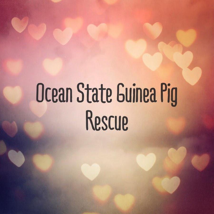 Ocean State Guinea Pig
