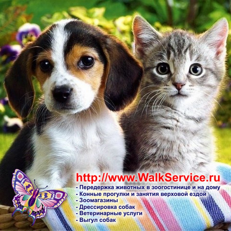 WalkService - всё о