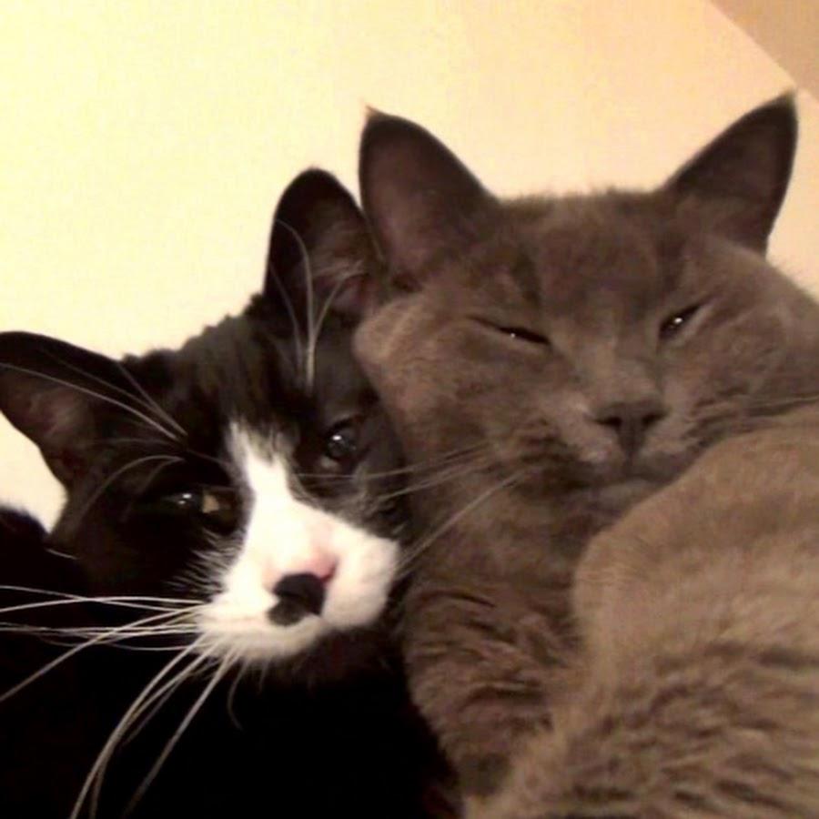 The Kits Cats