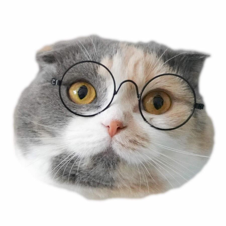 萌喵一箩筐cats rock