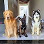 Cães em nossa vida!!!