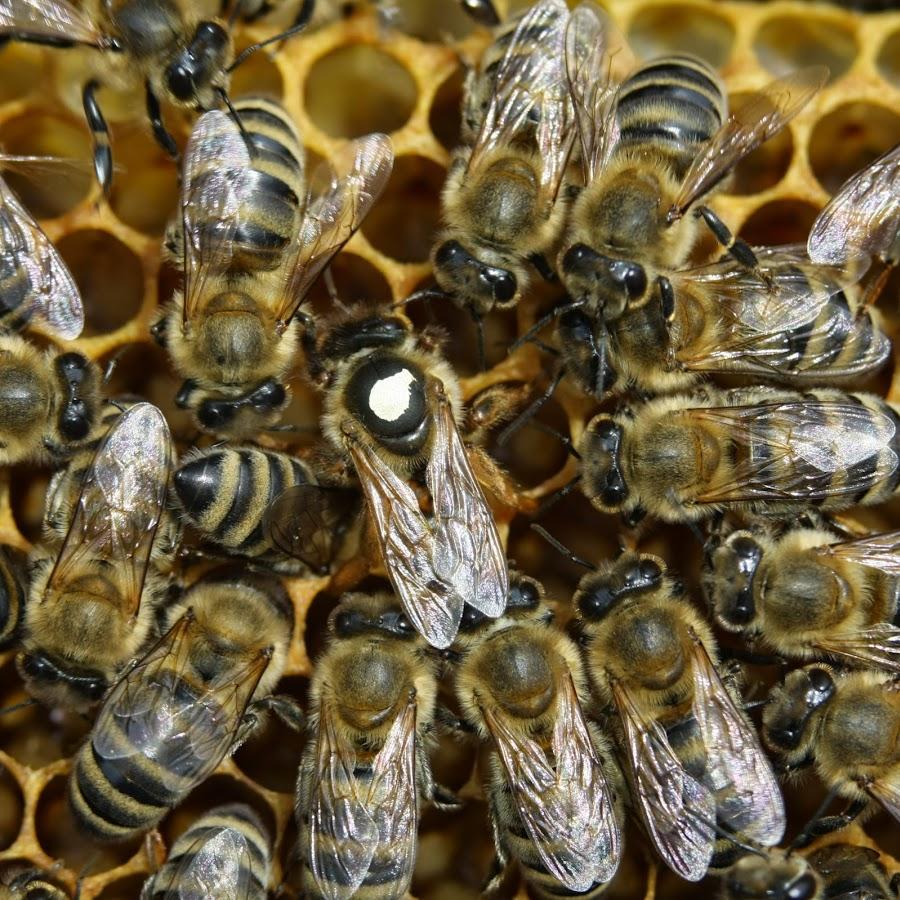 Uspješno Pčelarenje -