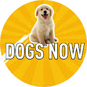 Dogs Now