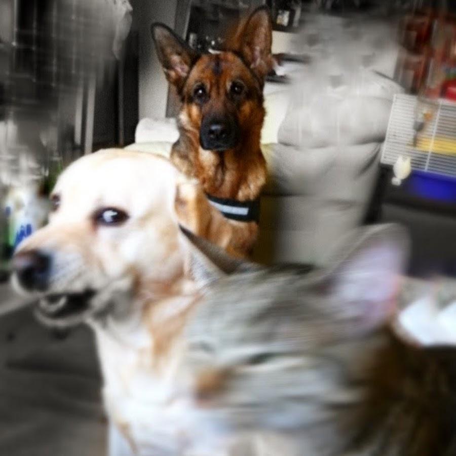 GoPro Cat & Dog Videos