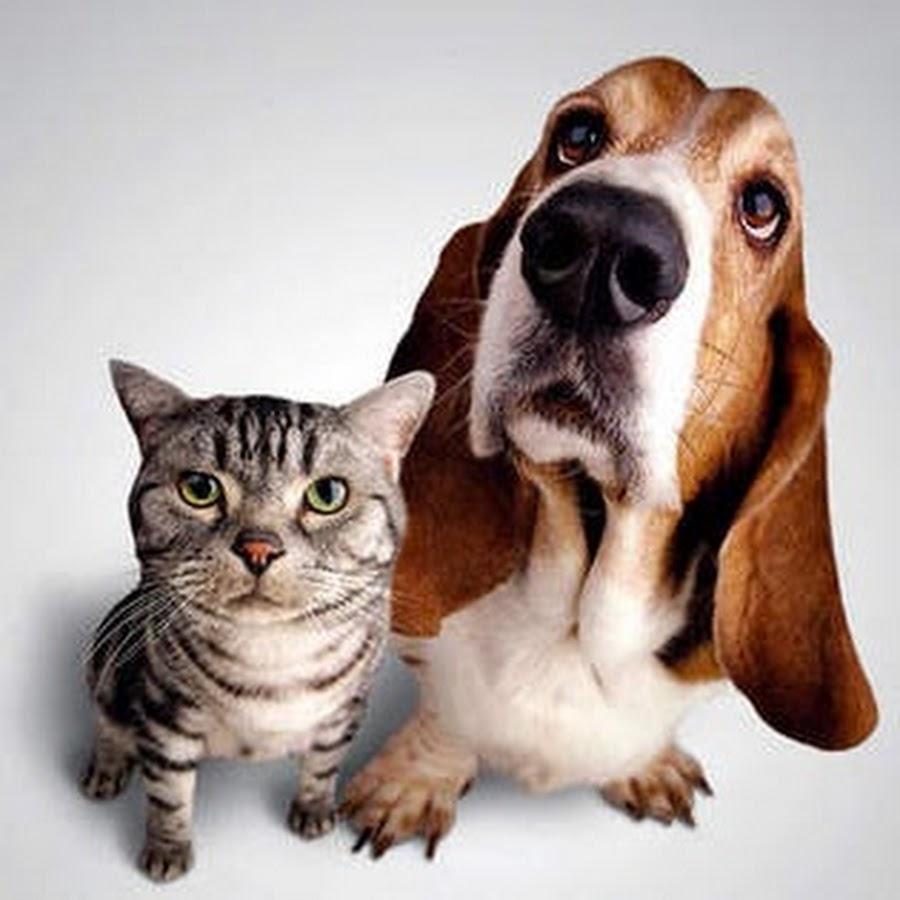 dogcat犬猫