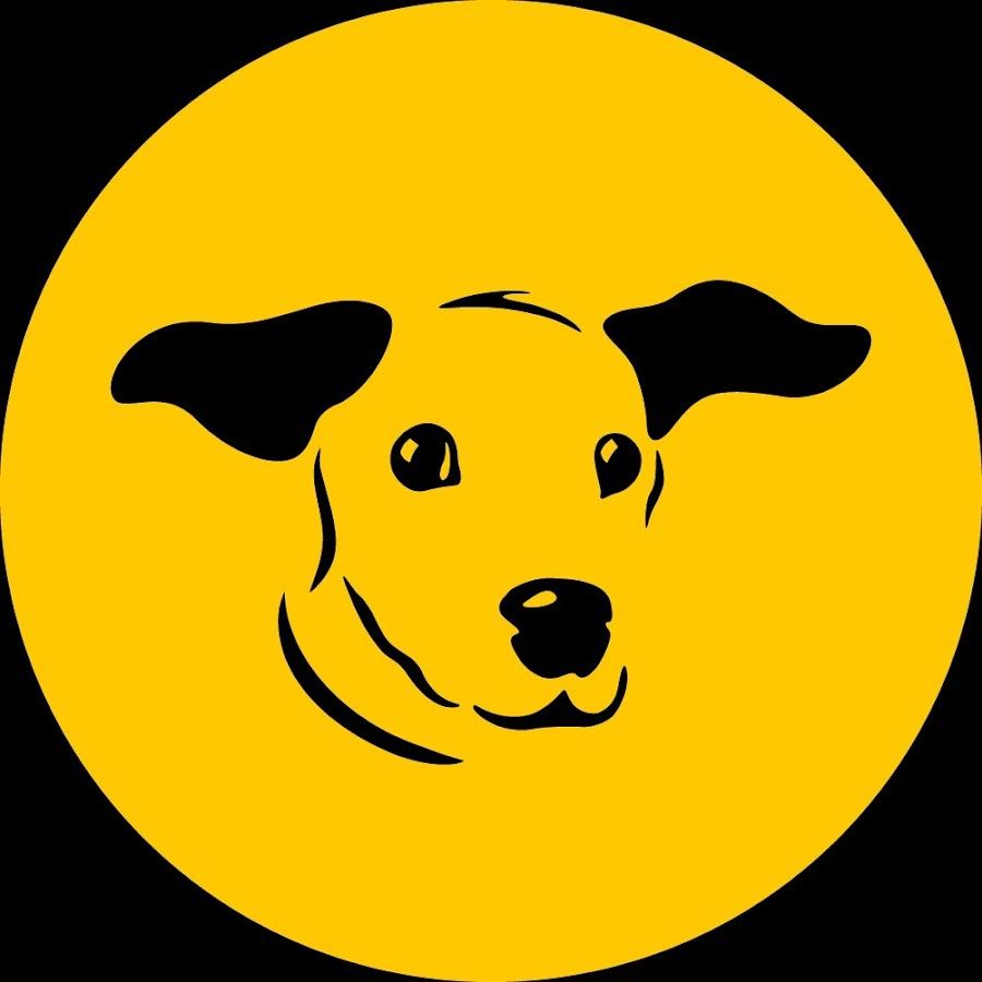 DogsTrustIreland