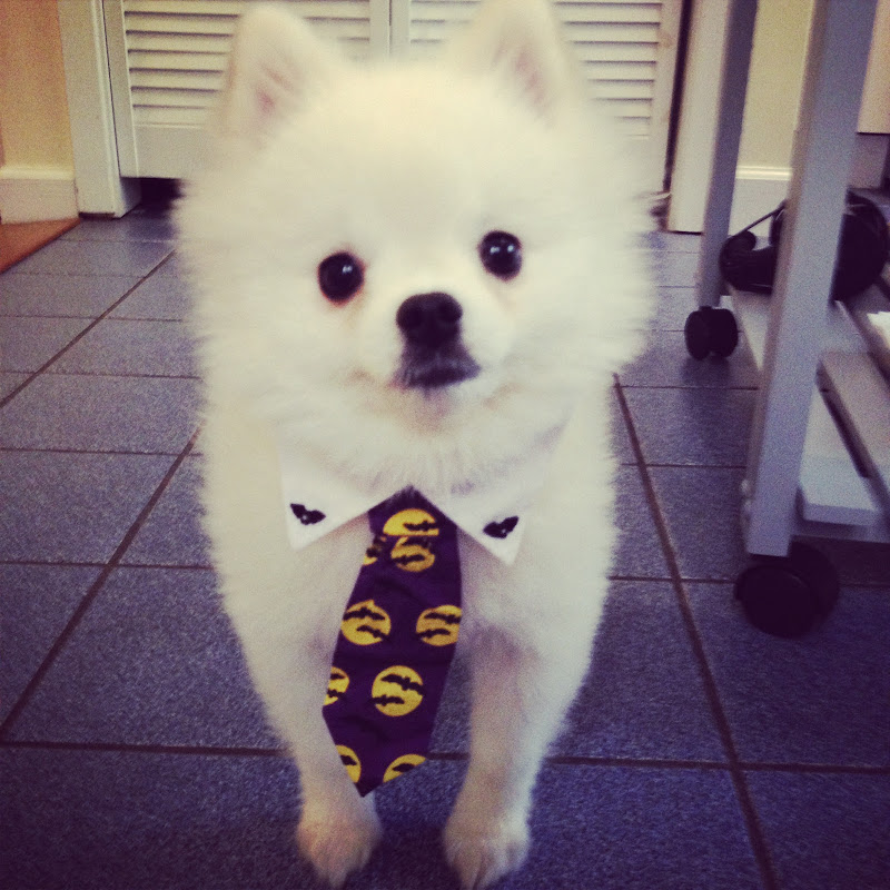 Roux the Pomeranian