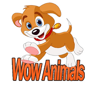 Wow Animals