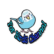 For birds channel net worth