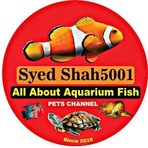 Syed Shah5001