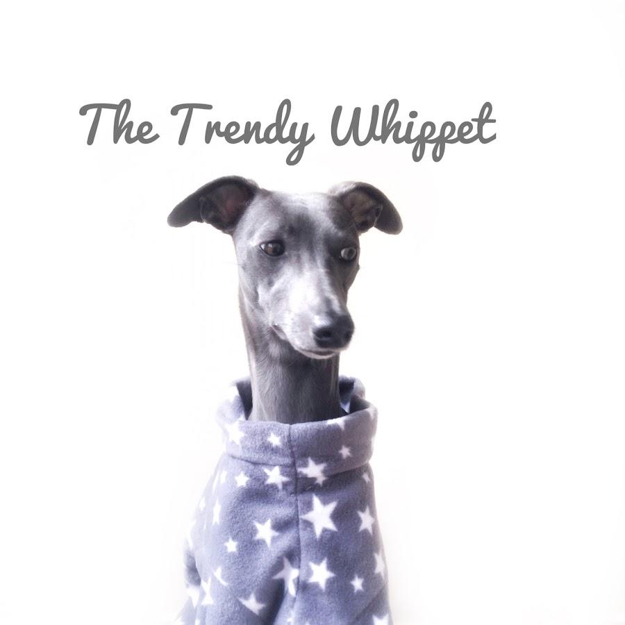 The Trendy Whippet