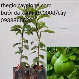 Thế Giới Cây Giống , Hệ thống phân phối giống cây trồng trên cả nước