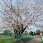 桜舞う峰子