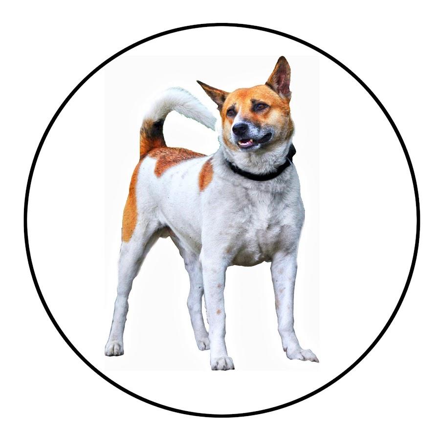 Dog Facts Bengali
