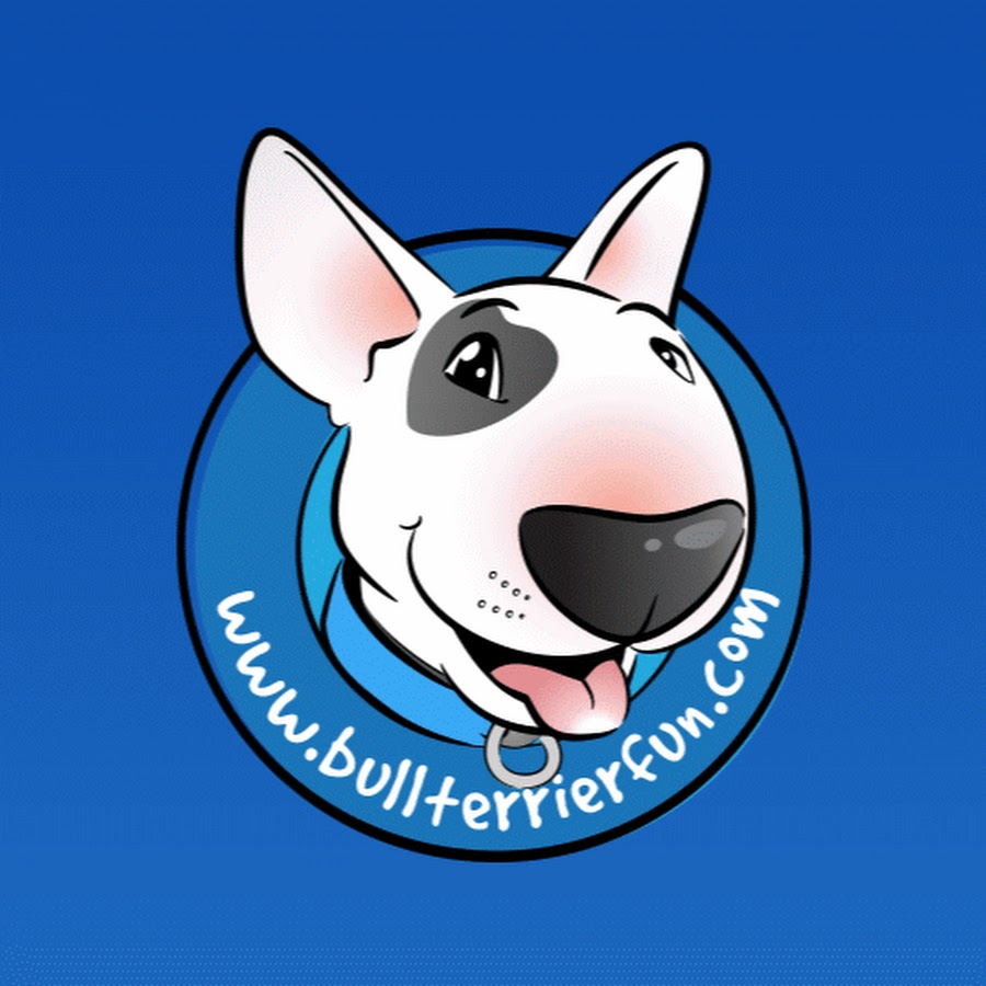 Bull Terrier Fun