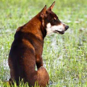 Cambo Dogs net worth