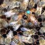 Bee Fantastic